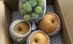 長野のフルーツ